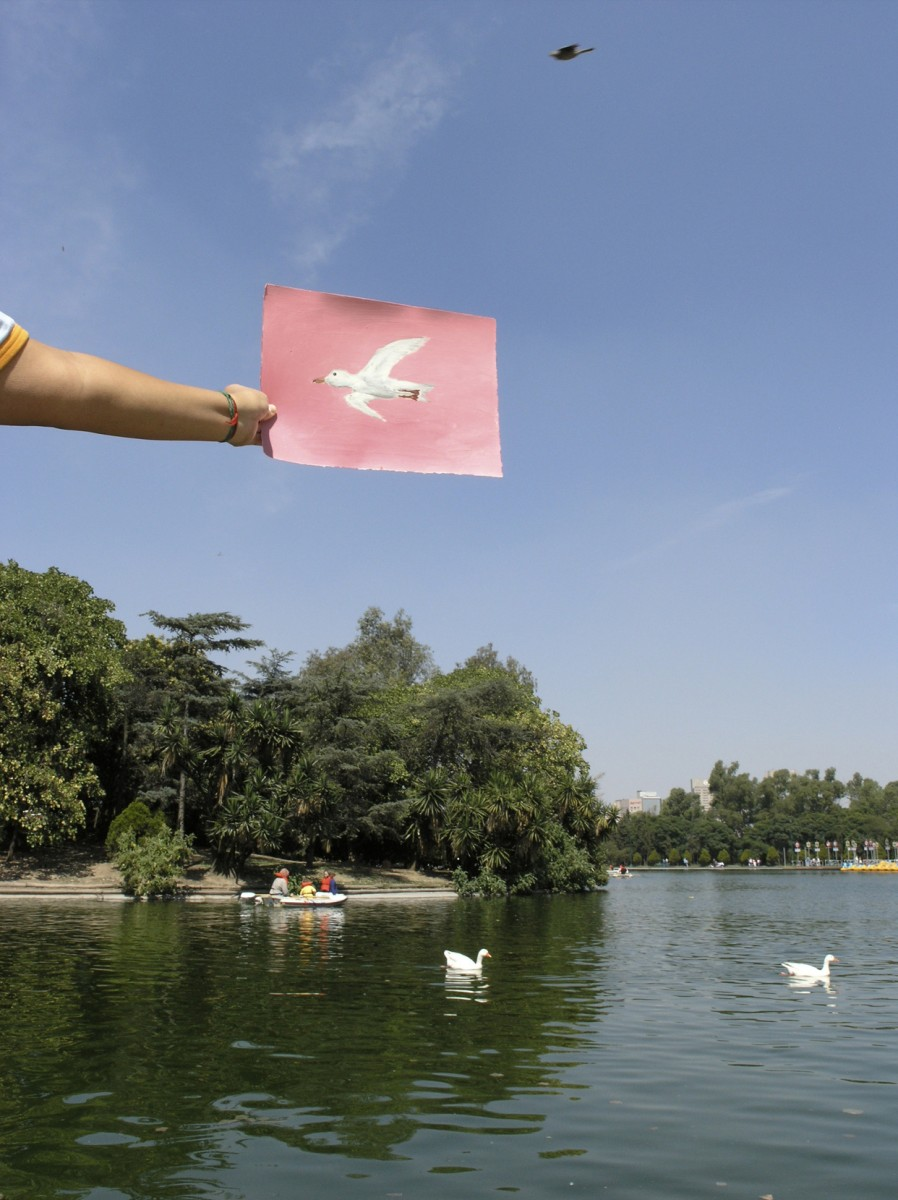 Art Photography, 2005 – Chapultepec Bird                                                <a href='http://paullitherland.com/artsite_wp/wp-content/uploads/2014/05/PaulLitherland-ArtPhotography2005_bird-898x1200.jpg' target='_blank'><img src='http://paullitherland.com/artsite_wp/wp-content/themes/artpress-child/img/artworkDownloadImg.png' title='télécharger image / download image' /></a>                                                  <!-- FIX!! write if statement here so this href and img only appear when category is 'series' cat=5 see also line 325, so same there --> 												<a href='http://paullitherland.com/chapultepec-bird/' target='_blank'>  												 <img src='http://paullitherland.com/artsite_wp/wp-content/themes/artpress-child/img/artworkPermalinkIcon.png' title='permalink to photo' /></a>