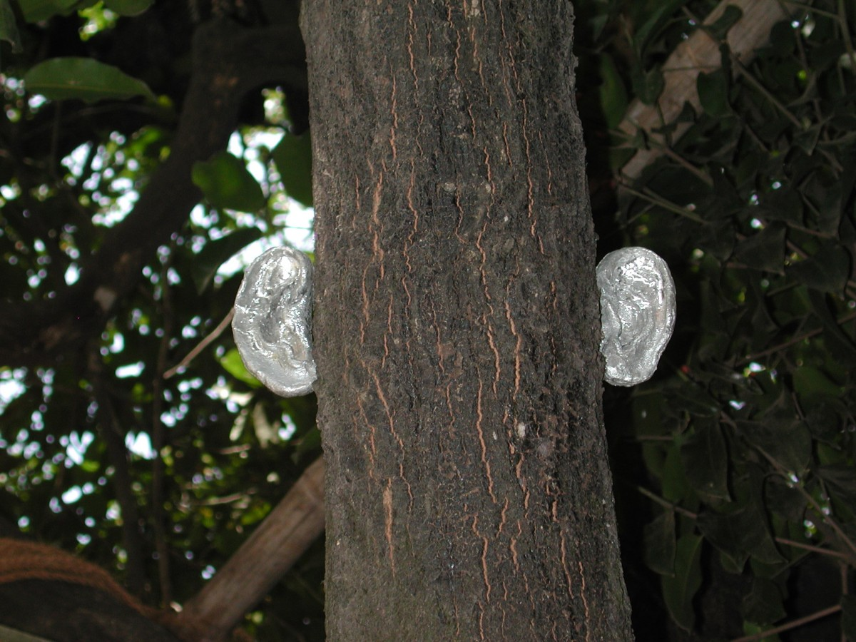 """Listener"" from <i></i>, 2001 –  										 – Detail of tin ears attached to tree"