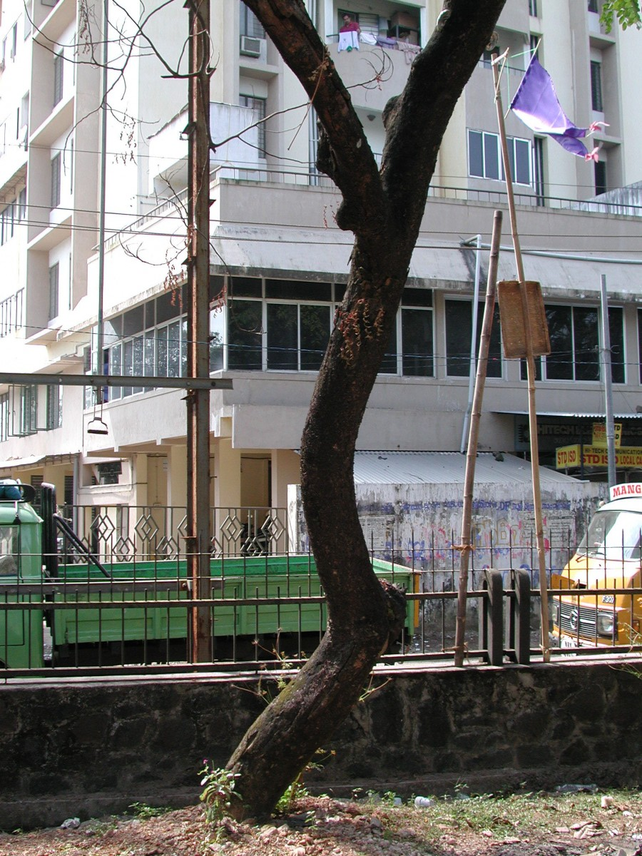 Listener, 2001 –  													Detail of tin ear attached to tree (very top of right side branch of tree)
